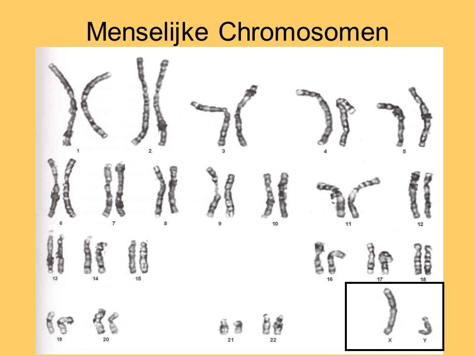 Menselijke Chromosomen