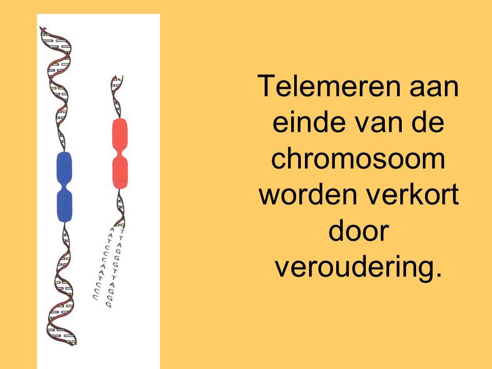 Telemeren aan einde van de chromosoom worden verkort door veroudering.