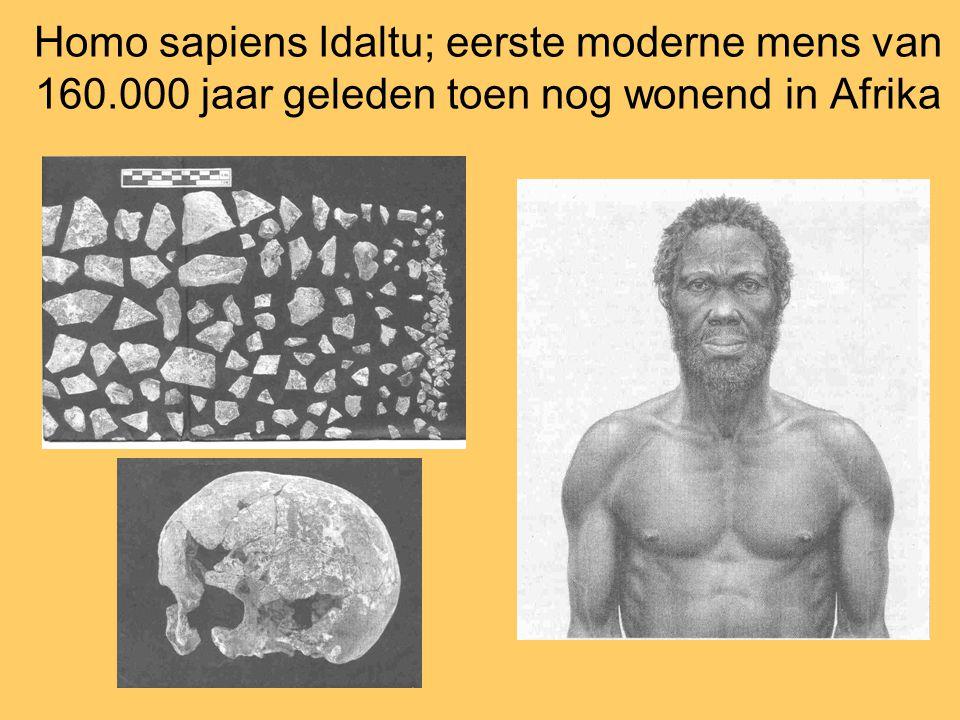 Homo sapiens Idaltu; eerste moderne mens van 160