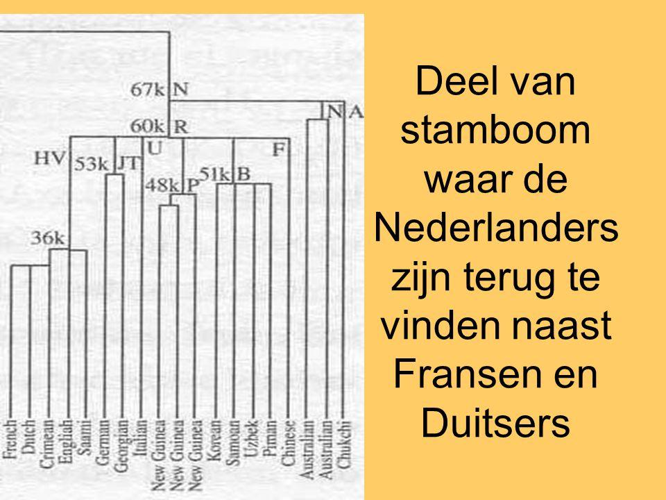 Deel van stamboom waar de Nederlanders zijn terug te vinden naast Fransen en Duitsers