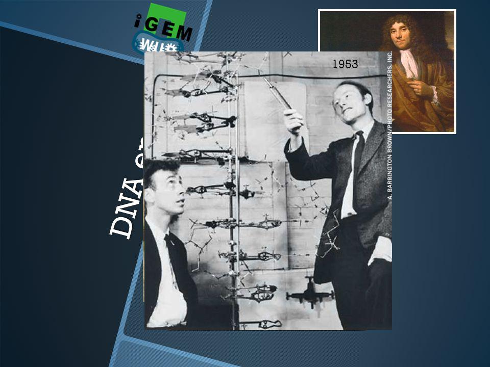 DNA enzo... Stukje geschiedenis 1953 1869 1859 1856 1632 microscoop