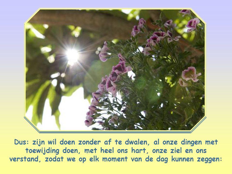 Dus: zijn wil doen zonder af te dwalen, al onze dingen met toewijding doen, met heel ons hart, onze ziel en ons verstand, zodat we op elk moment van de dag kunnen zeggen: