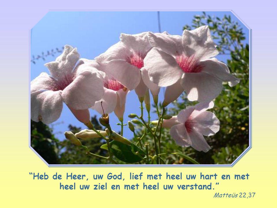 Heb de Heer, uw God, lief met heel uw hart en met heel uw ziel en met heel uw verstand.