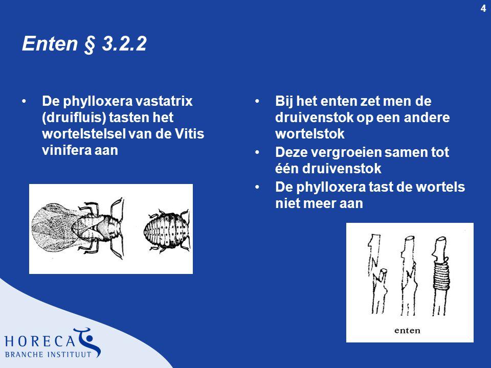 Enten § 3.2.2 De phylloxera vastatrix (druifluis) tasten het wortelstelsel van de Vitis vinifera aan.