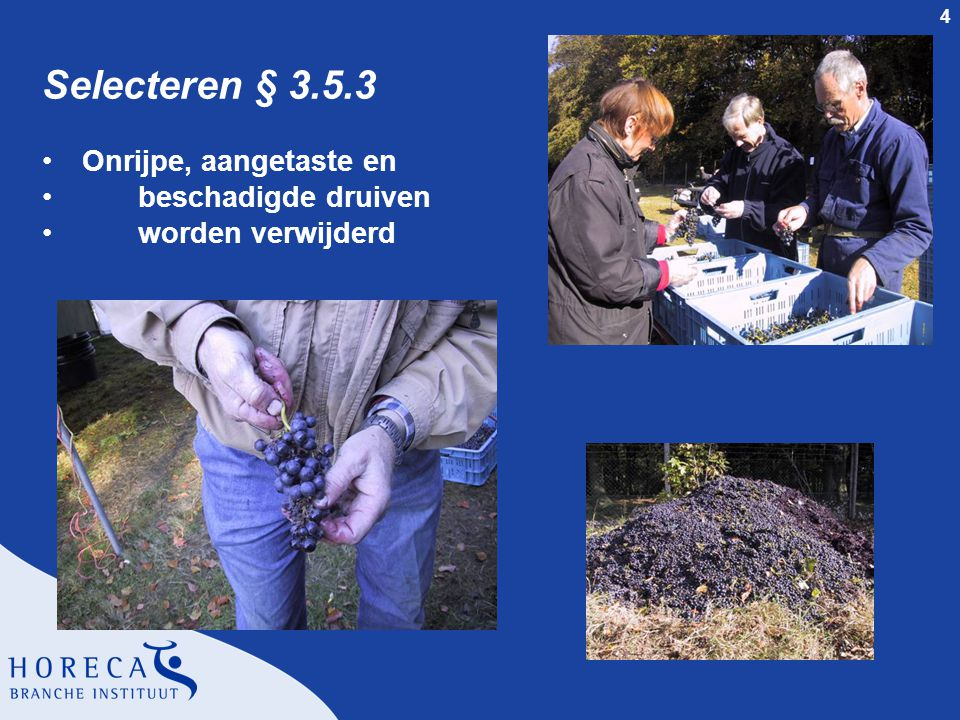 Selecteren § 3.5.3 Onrijpe, aangetaste en beschadigde druiven