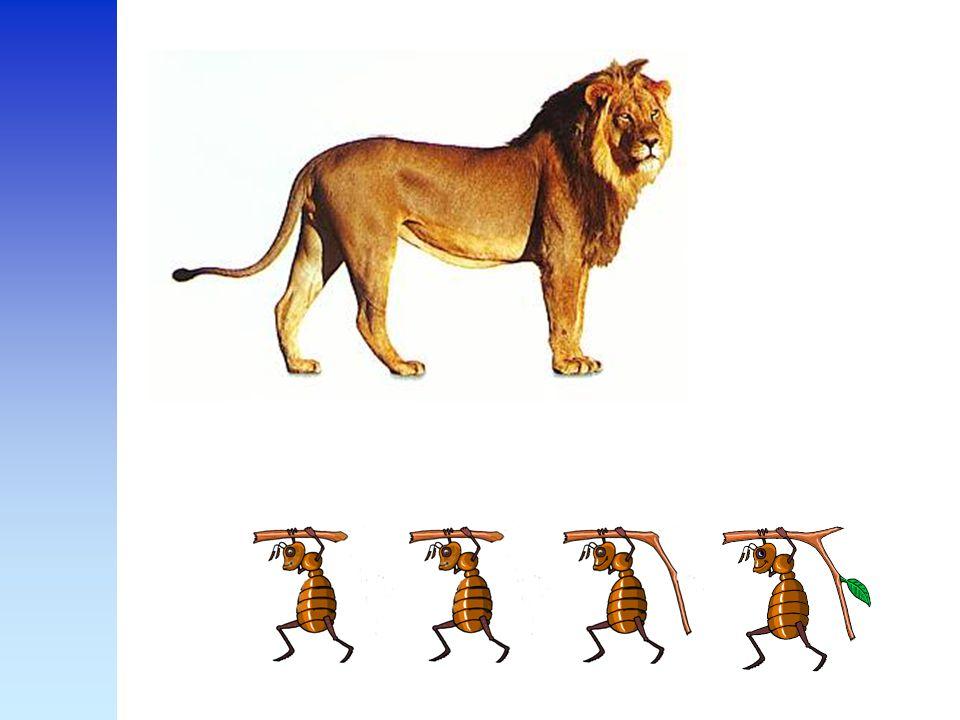 Plotseling kwamen ze langs een leeuw