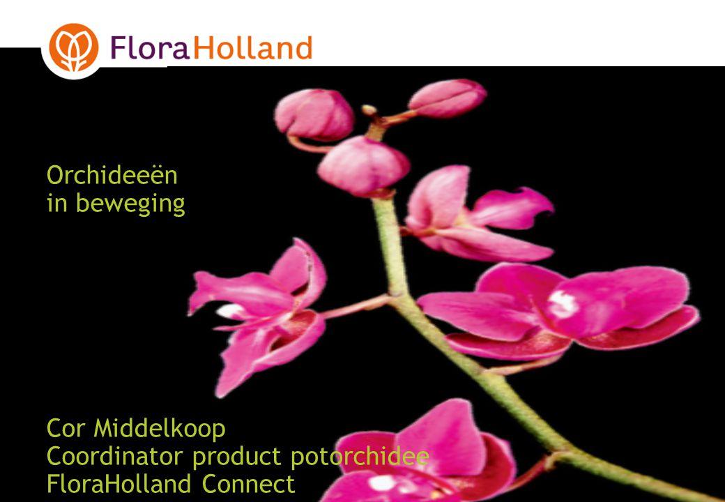 Orchideeën in beweging Cor Middelkoop Coordinator product potorchidee FloraHolland Connect