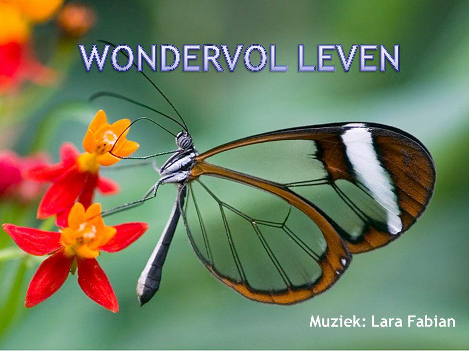 WONDERVOL LEVEN Muziek: Lara Fabian