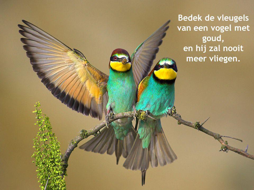 Bedek de vleugels van een vogel met goud, en hij zal nooit meer vliegen.