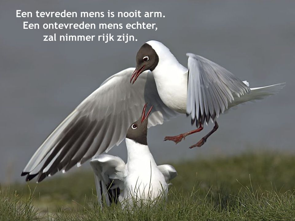Een tevreden mens is nooit arm.