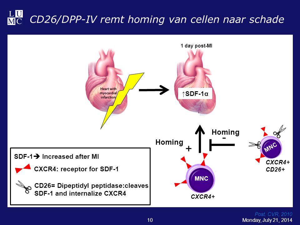 CD26/DPP-IV remt homing van cellen naar schade