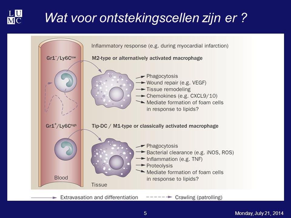 Wat voor ontstekingscellen zijn er