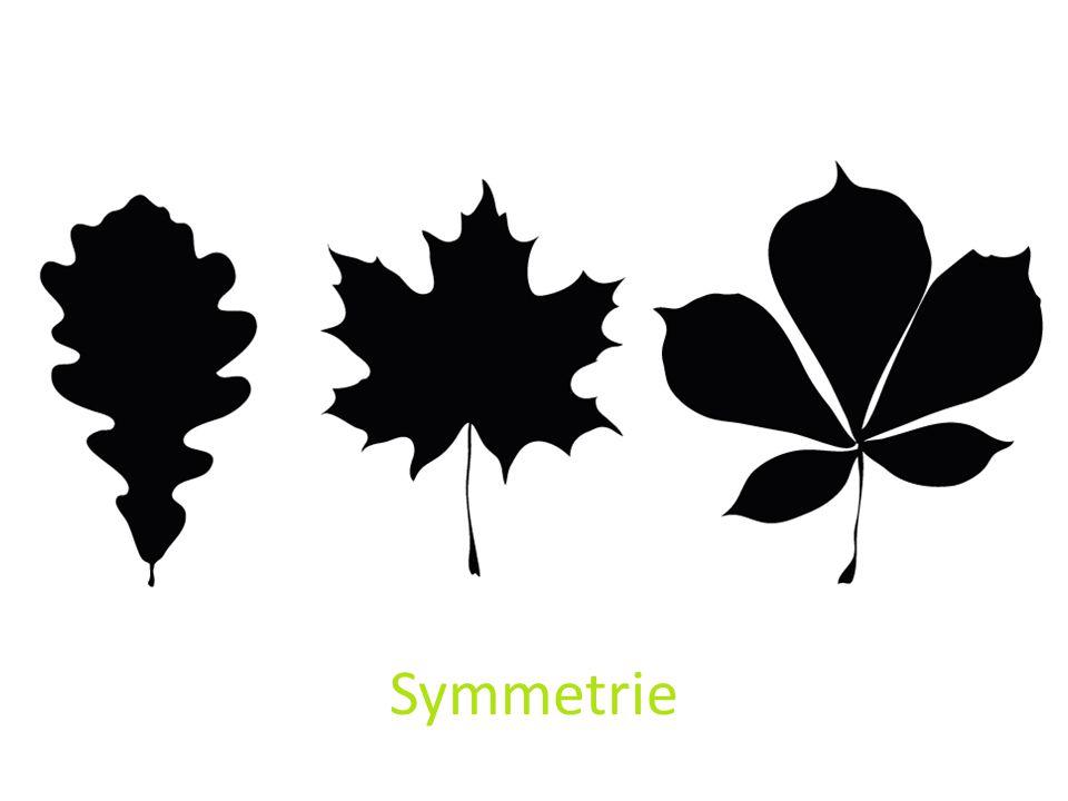 Symetrie is aantrekkelijk. Mensen houden van symetrie