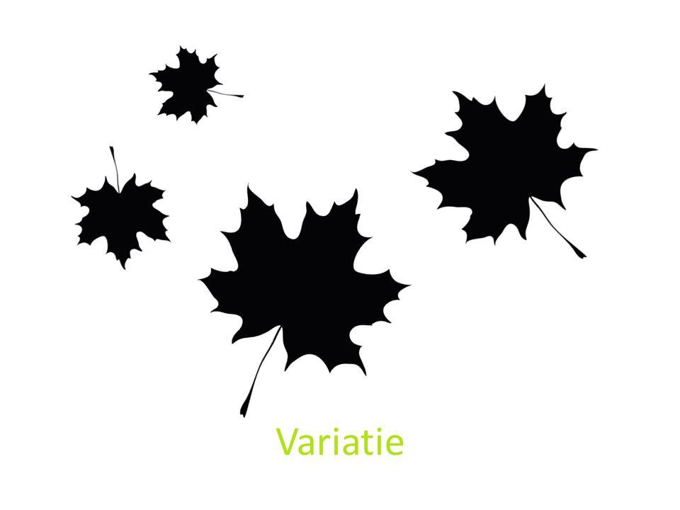 Door rotatie en vergroten verkleinen krijg je een dynnamischer compositie.