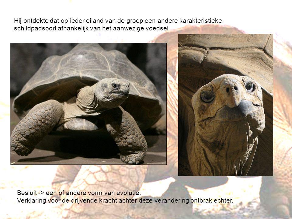Hij ontdekte dat op ieder eiland van de groep een andere karakteristieke schildpadsoort afhankelijk van het aanwezige voedsel