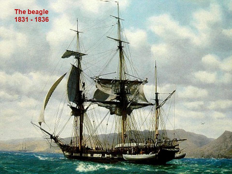 The beagle 1831 - 1836