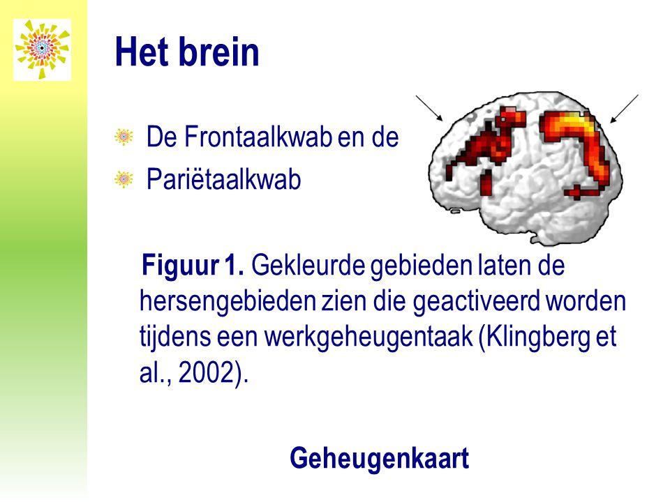 Het brein De Frontaalkwab en de Pariëtaalkwab