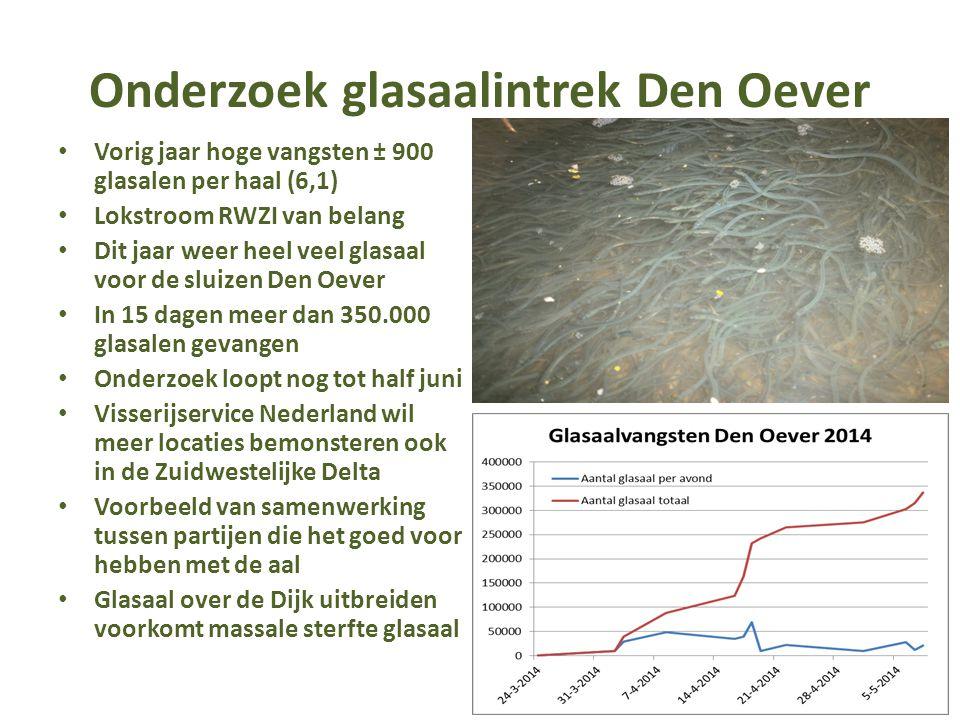 Onderzoek glasaalintrek Den Oever