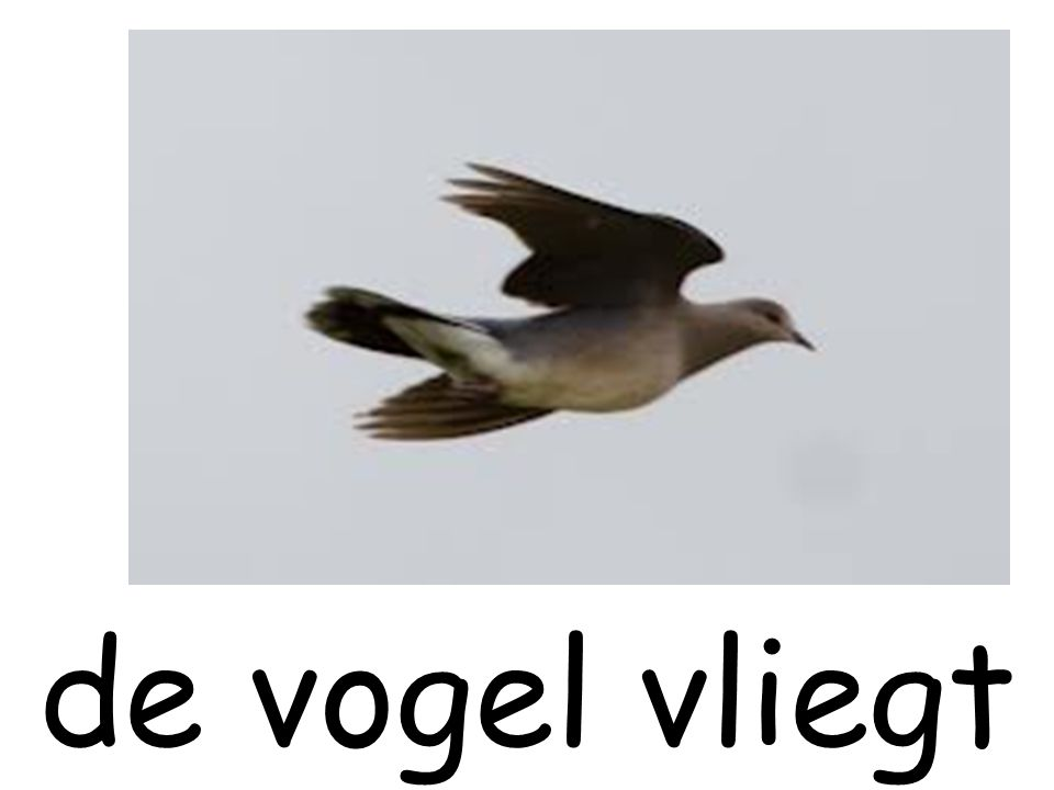 de vogel vliegt