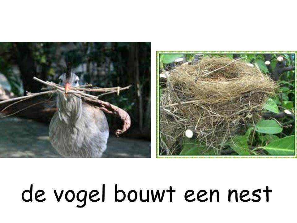 de vogel bouwt een nest