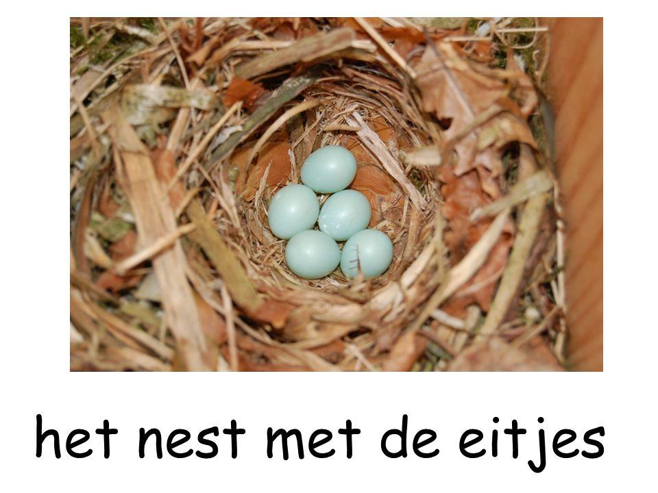het nest met de eitjes