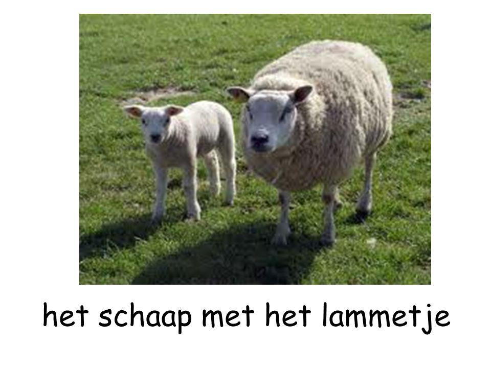 het schaap met het lammetje