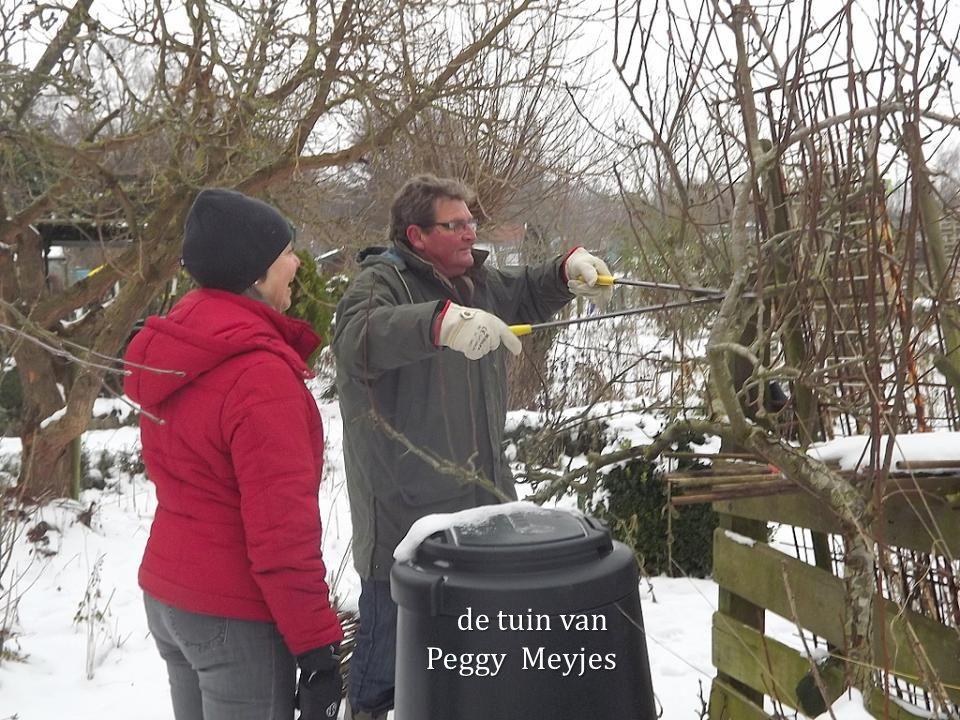 de tuin van Peggy Meyjes