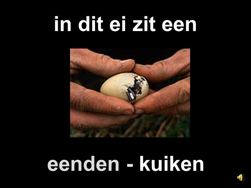 in dit ei zit een eenden - kuiken