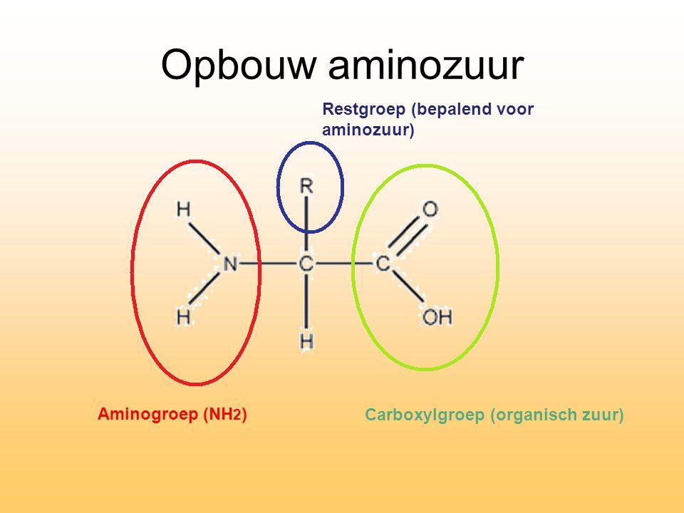 Opbouw aminozuur Restgroep (bepalend voor aminozuur) Aminogroep (NH2)