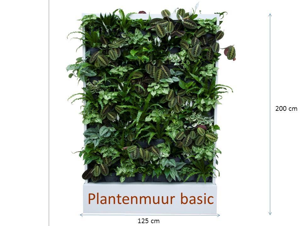 200 cm Plantenmuur basic 125 cm