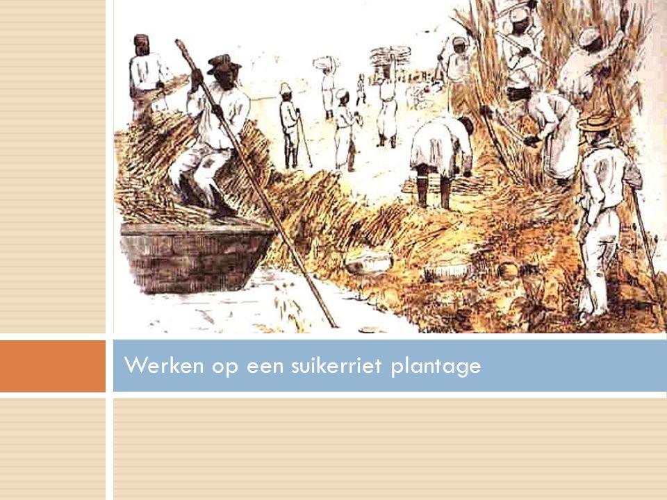 Werken op een suikerriet plantage