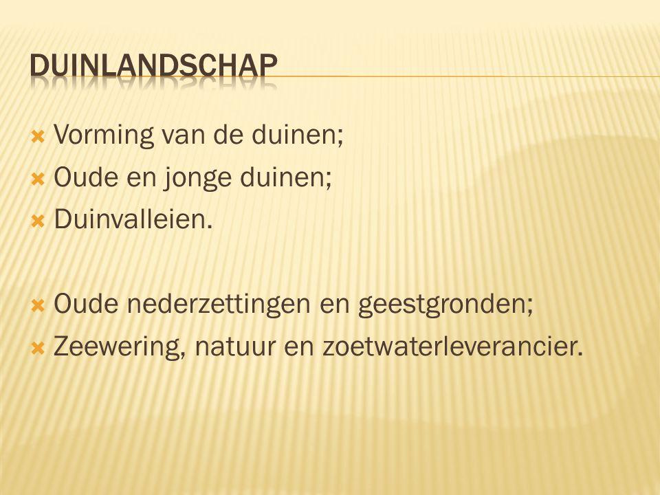 duinlandschap Vorming van de duinen; Oude en jonge duinen;