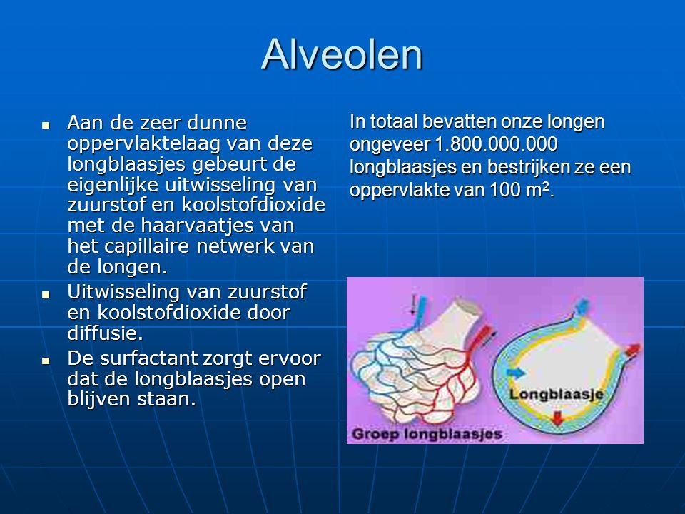 Alveolen