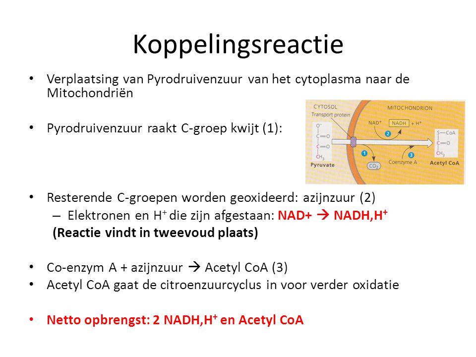 Koppelingsreactie Verplaatsing van Pyrodruivenzuur van het cytoplasma naar de Mitochondriën. Pyrodruivenzuur raakt C-groep kwijt (1):