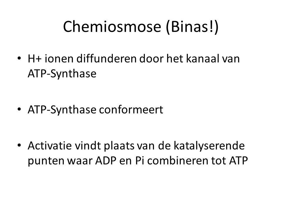 Chemiosmose (Binas!) H+ ionen diffunderen door het kanaal van ATP-Synthase. ATP-Synthase conformeert.