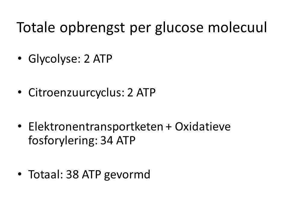 Totale opbrengst per glucose molecuul