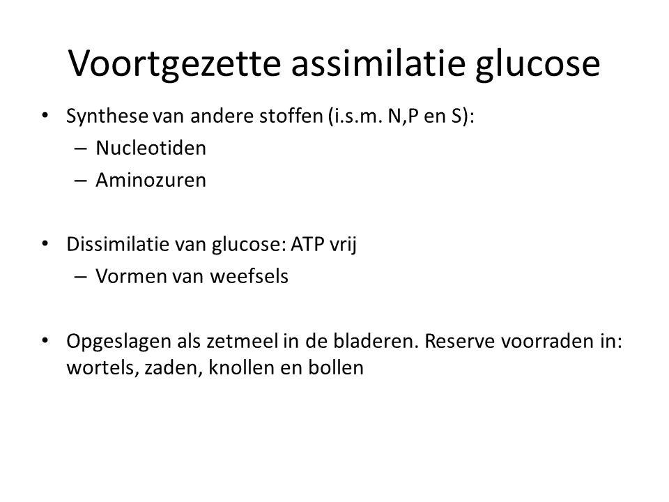 Voortgezette assimilatie glucose