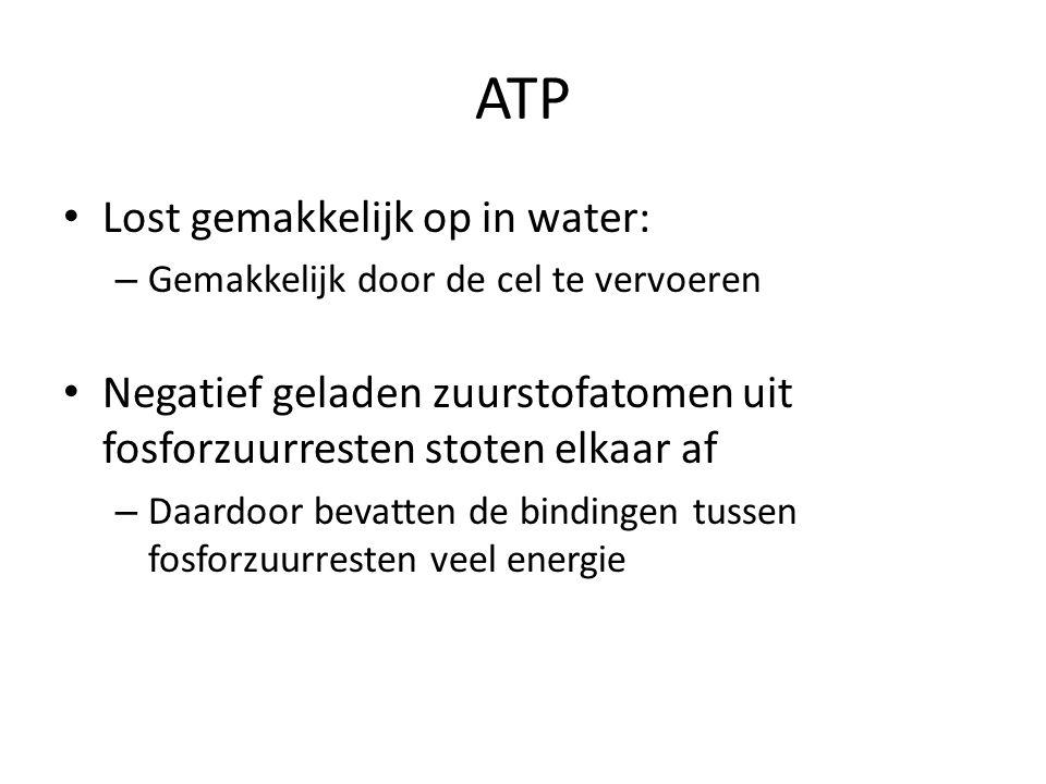 ATP Lost gemakkelijk op in water: