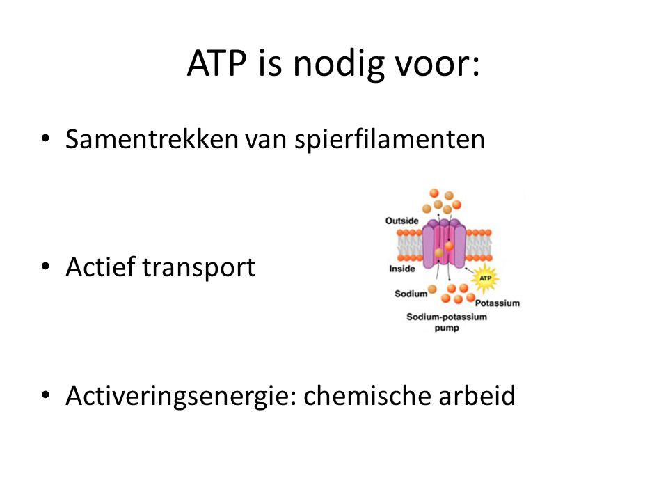 ATP is nodig voor: Samentrekken van spierfilamenten Actief transport