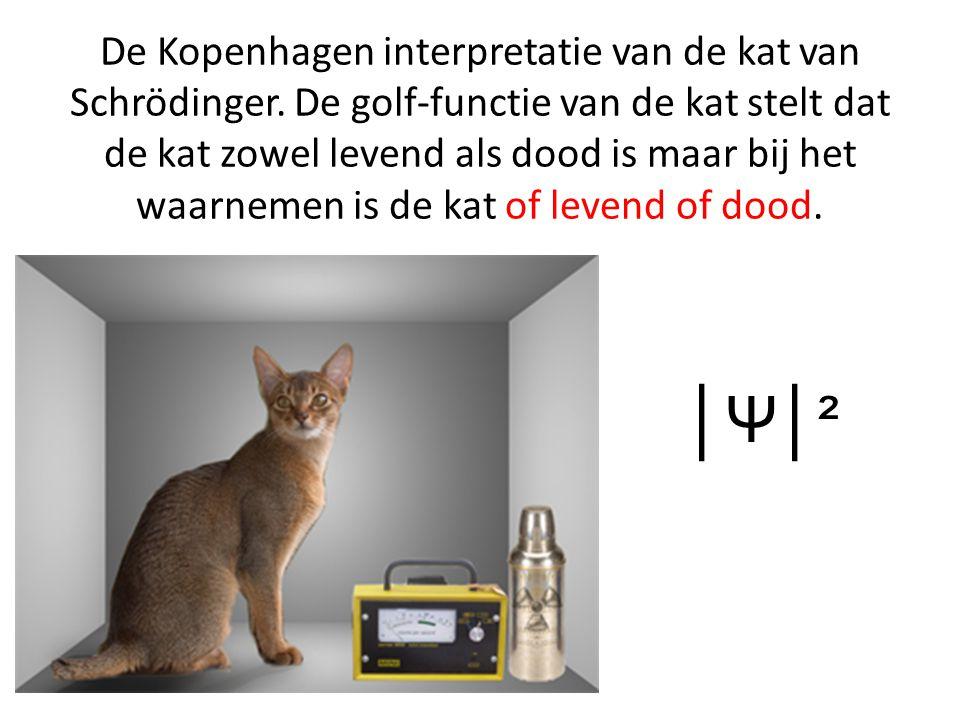 De Kopenhagen interpretatie van de kat van Schrödinger