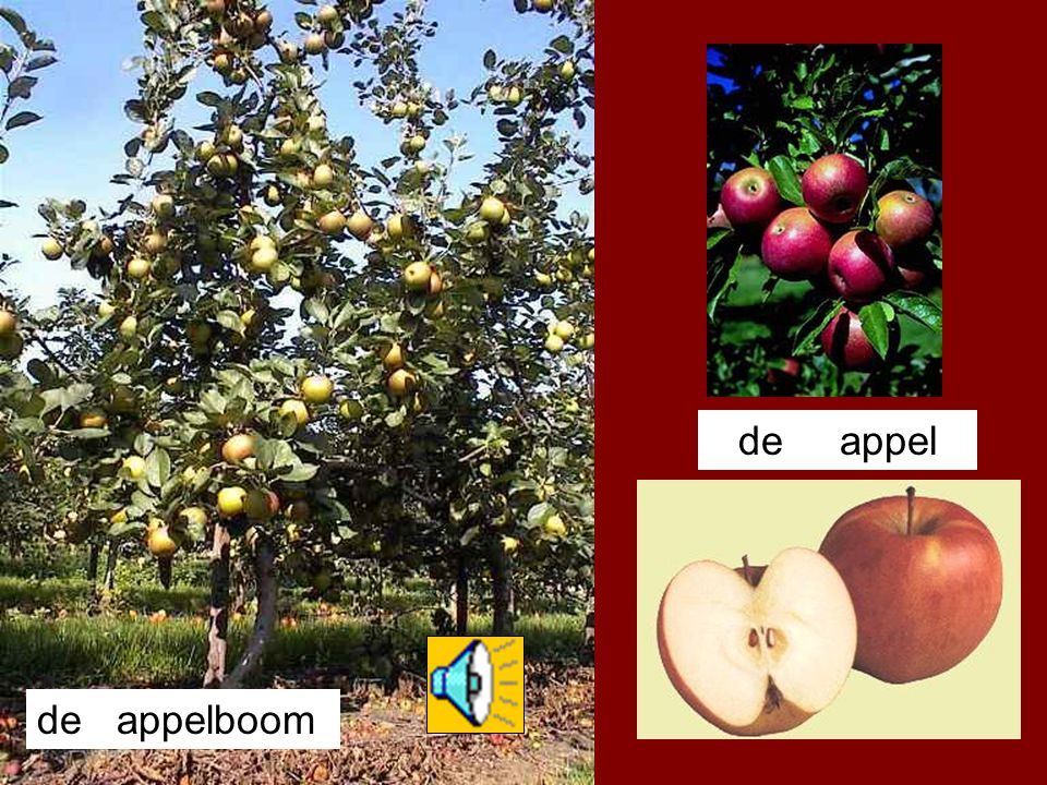 de appel de appelboom