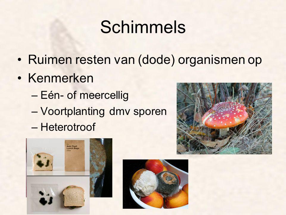 Schimmels Ruimen resten van (dode) organismen op Kenmerken