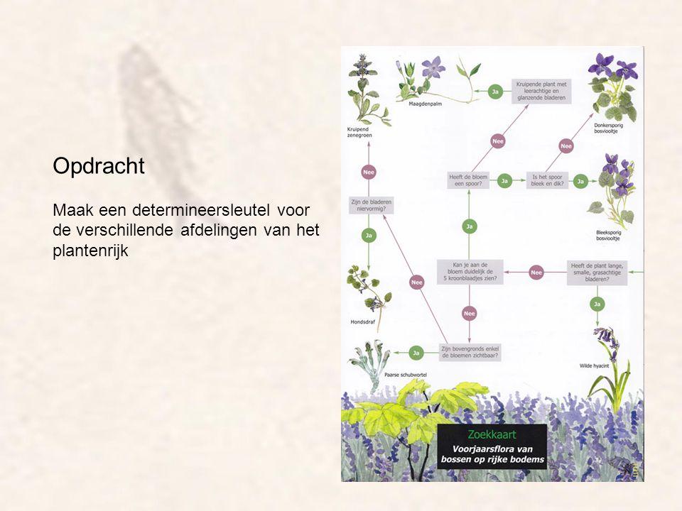 Opdracht Maak een determineersleutel voor de verschillende afdelingen van het plantenrijk