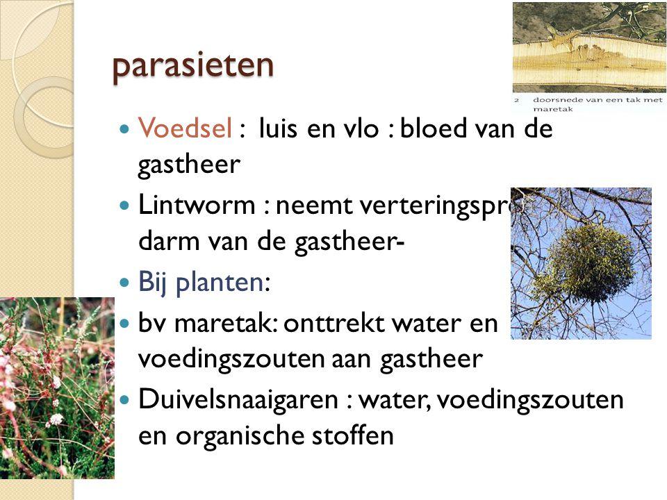 parasieten Voedsel : luis en vlo : bloed van de gastheer