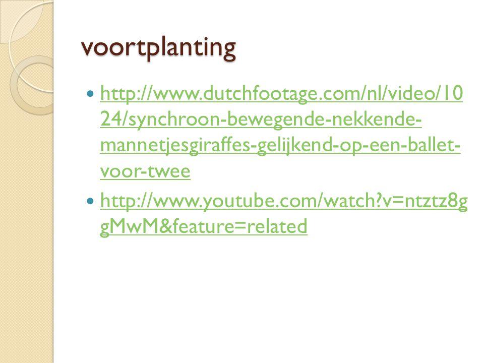 voortplanting http://www.dutchfootage.com/nl/video/10 24/synchroon-bewegende-nekkende- mannetjesgiraffes-gelijkend-op-een-ballet- voor-twee.