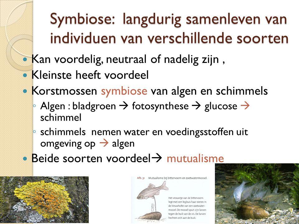 Symbiose: langdurig samenleven van individuen van verschillende soorten