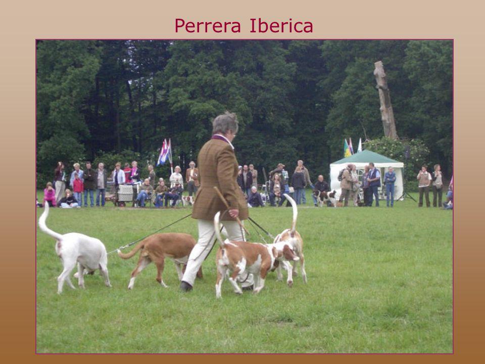 Perrera Iberica