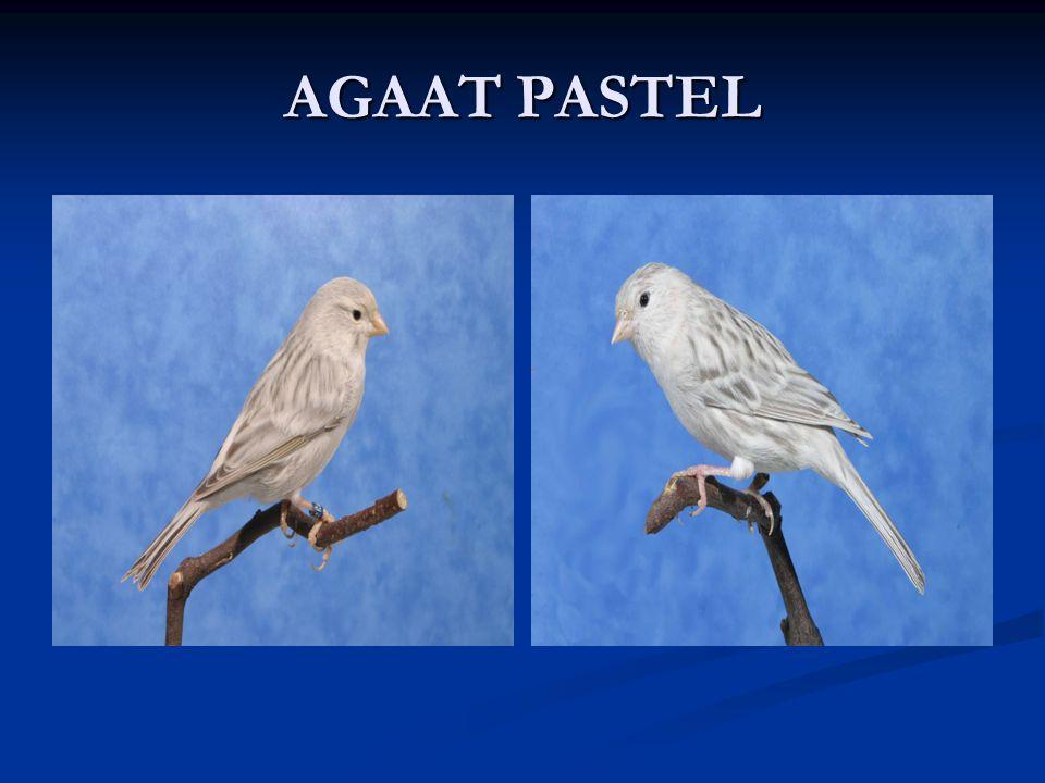AGAAT PASTEL