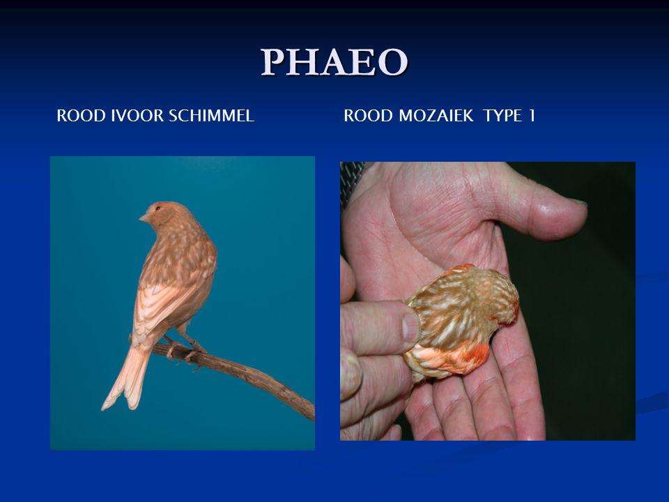 PHAEO ROOD IVOOR SCHIMMEL ROOD MOZAIEK TYPE 1