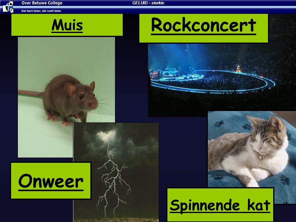GELUID - sterkte Rockconcert Muis Onweer Spinnende kat